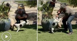Dog Whisperer, Cesar Millan Animal Cruelty
