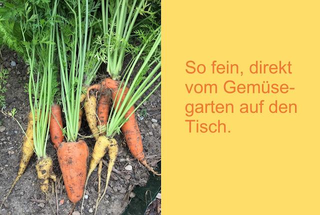frisch geerntete Rüebli Karotten