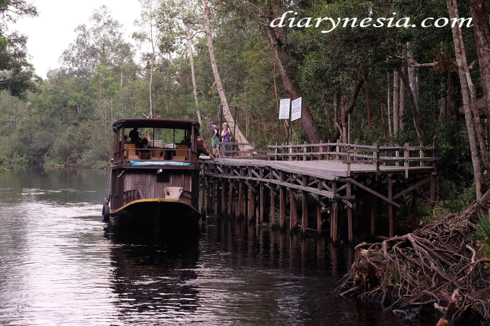 Central Kalimantan tourism, the World's Largest Orangutan Conservation, Central Borneo Tourism, diarynesia