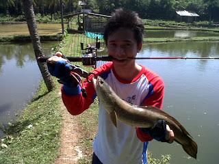 Umpan-Ikan-Gabus-Paling-Jitu