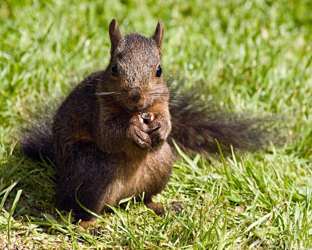 صور سنجاب Squirrel Pictures See A Picture