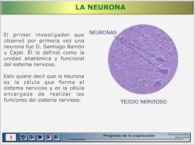 http://recursostic.educacion.es/secundaria/edad/2esobiologia/2quincena9/imagenes1/neuronas.swf