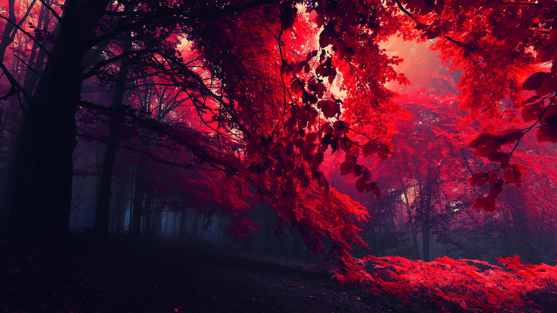 Red Leaves Beautiful Fall Landscapes HD Wallpapers ...