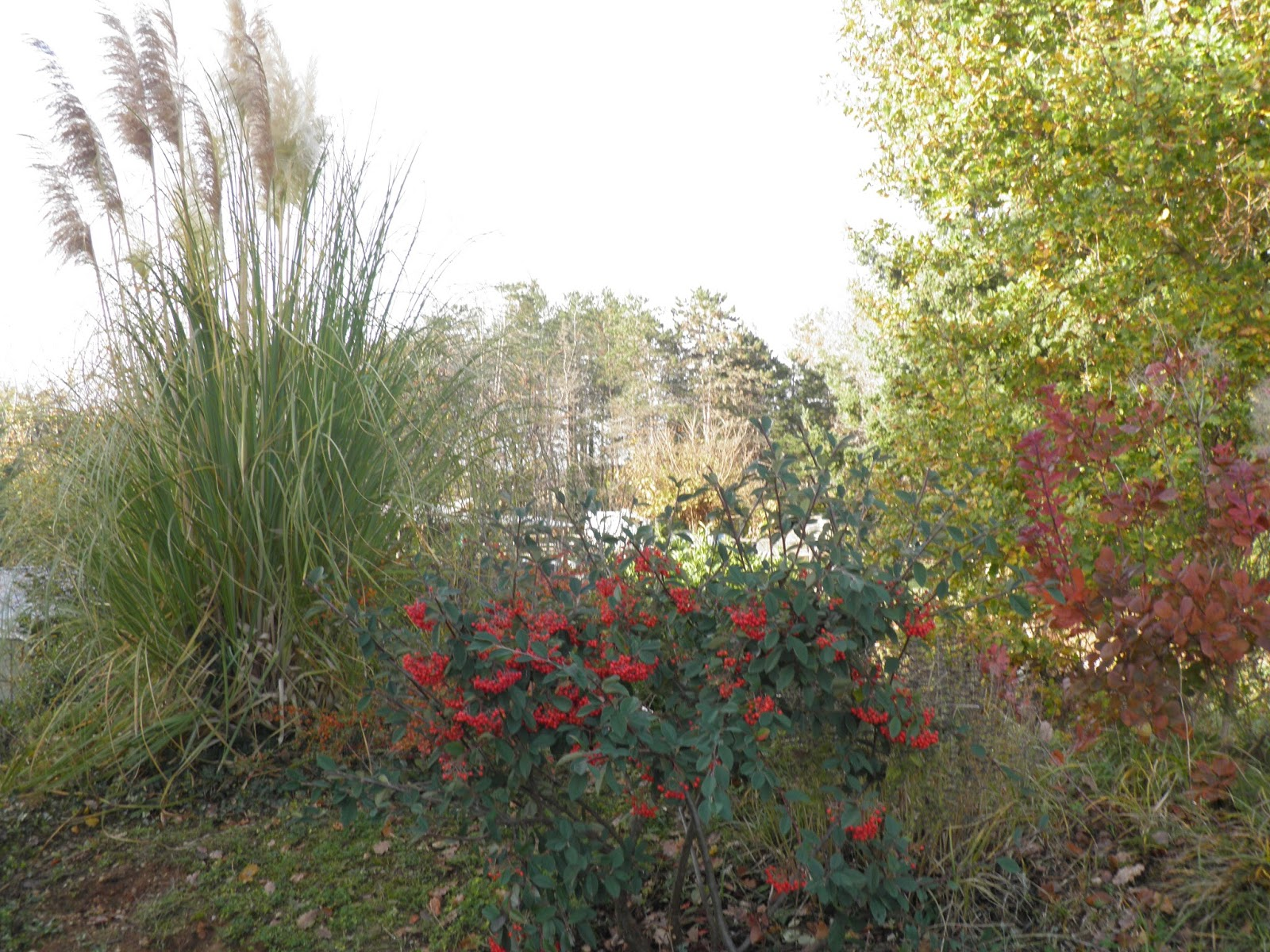 mon jardin quercynois atmosph re de novembre. Black Bedroom Furniture Sets. Home Design Ideas