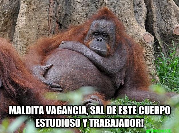 Frases De Mono: Maldita Vagancia, Sal De Este Cuerpo Estudioso Y Trabajador