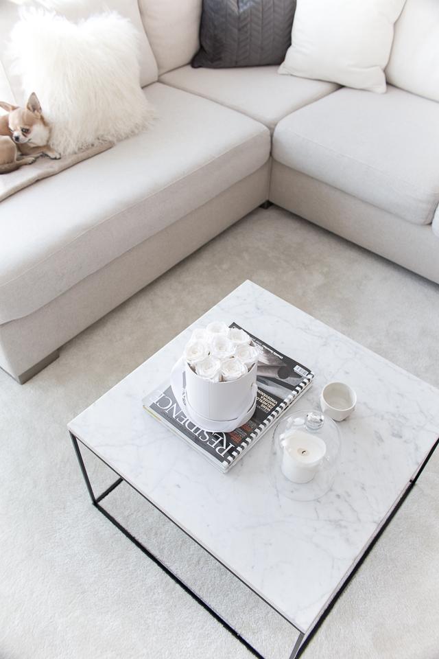chihuahua, marmori sohvapöytä, infinity flower box