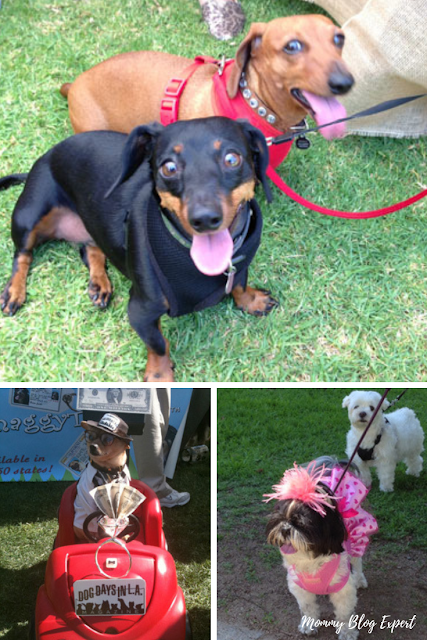 Woofstock Dog Festival Beverly Hills
