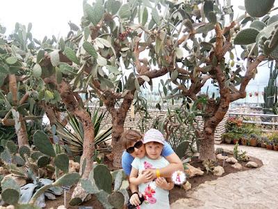 Огромные деревья кактусы в Болгарии