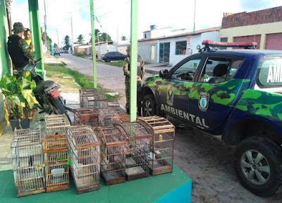Guardas Municipais de Natal (RN) resgatam pássaros silvestres no bairro de Nossa Senhora da Apresentação