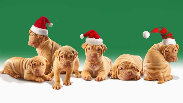 Foto met zes honden met kerstmutsen
