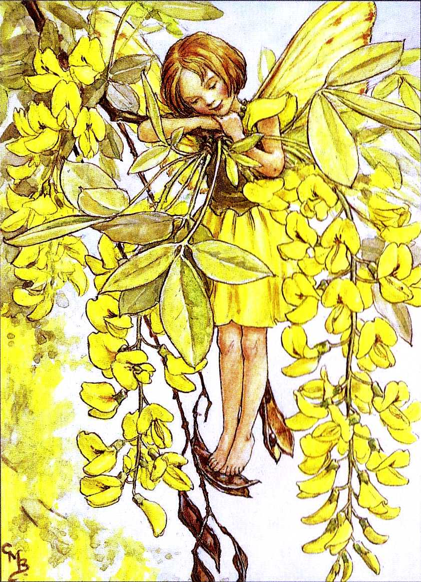 a Cicely Mary Barker illustration of a tree fairy
