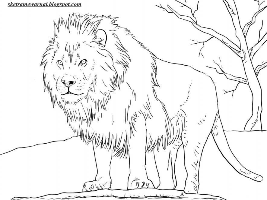 4400 Koleksi Sketsa Gambar Binatang Untuk Anak Tk Terbaik