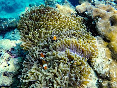 Than Bok Kohrani-Snorkeling-Koh-Pak-Ka-Koh-Yao-Noi-Thailande