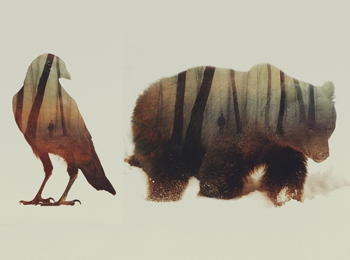 00-Andreas-Lie-Animals-Photographic-Double-Exposures-www-designstack-co