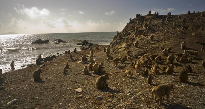 El huracán María devastó la Isla de los Monos en Puerto Rico