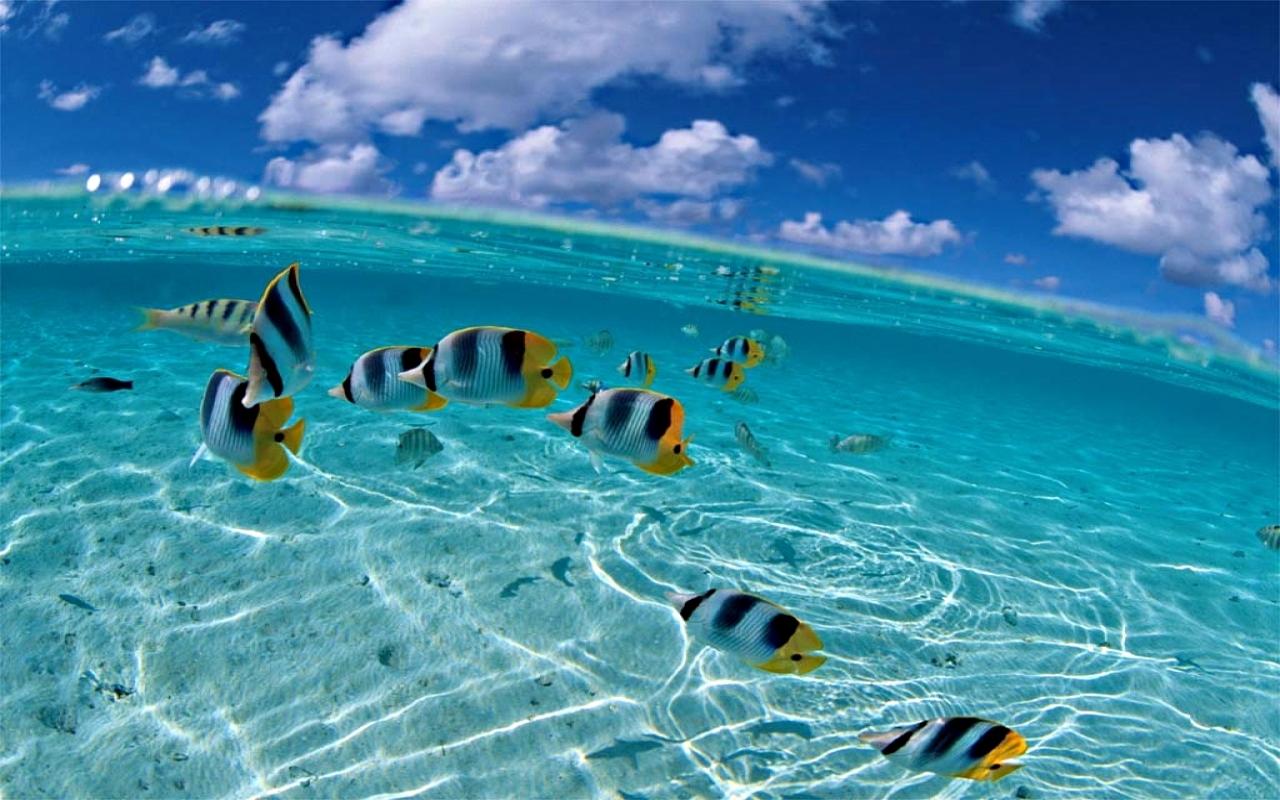 Inside Ocean HD Wallpapers – wallpaper202