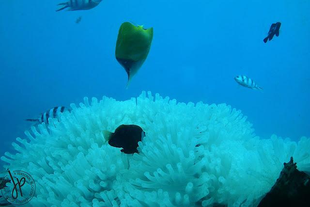 fish, corals, underwater creatures