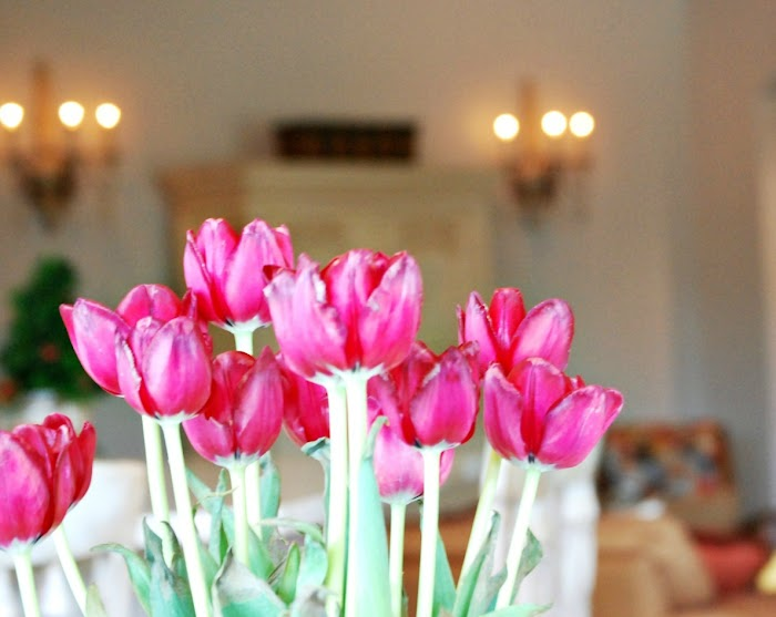 5 Tips For Caring For Fresh Cut Tulips