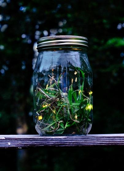 Kunang-kunang biasa muncul malam hari di musim panas, di daerah yang masih natural, banyak pohon, rumput, dan dekat perairan (sungai atau danau). Kalau ada yang bisa menemukannya di suatu daerah, berarti daerah itu masih natural.