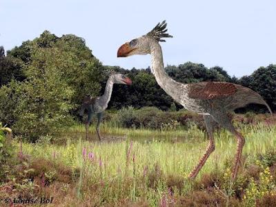miocene birds
