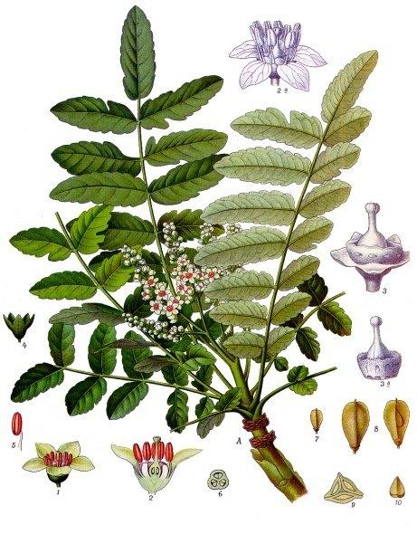 Artritis Remedios Naturales 2