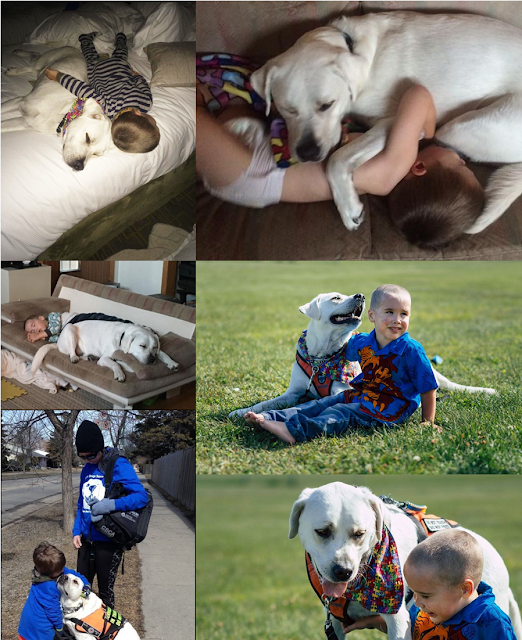 The Bond Between A Boy and His Dog Will Melt Your Heart!