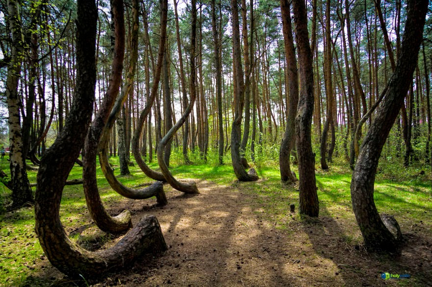 15. Crooked Forest In Poland - 22 Mysterious Forests I'd Love To Get Lost In