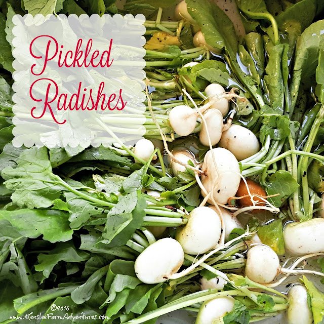 Pickled Radishes www.hensleefarmadventures.com