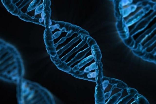 Ditemukan sel yang bisa membuat DNA menjadi muda kembali