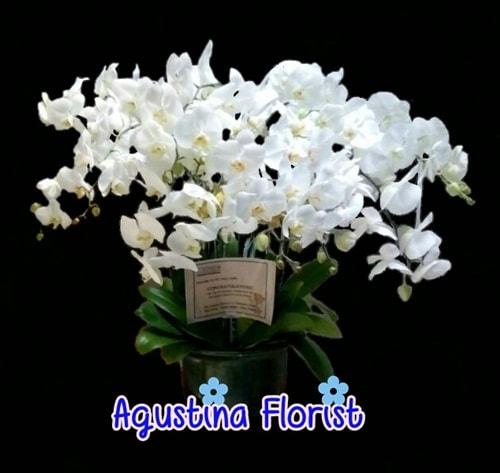rangkaian-bunga-anggrek-bulan-agustina-florist-surabaya
