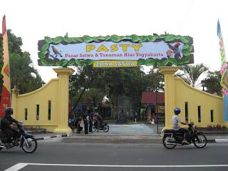 tempat penjualan jangkrik di yogyakarta