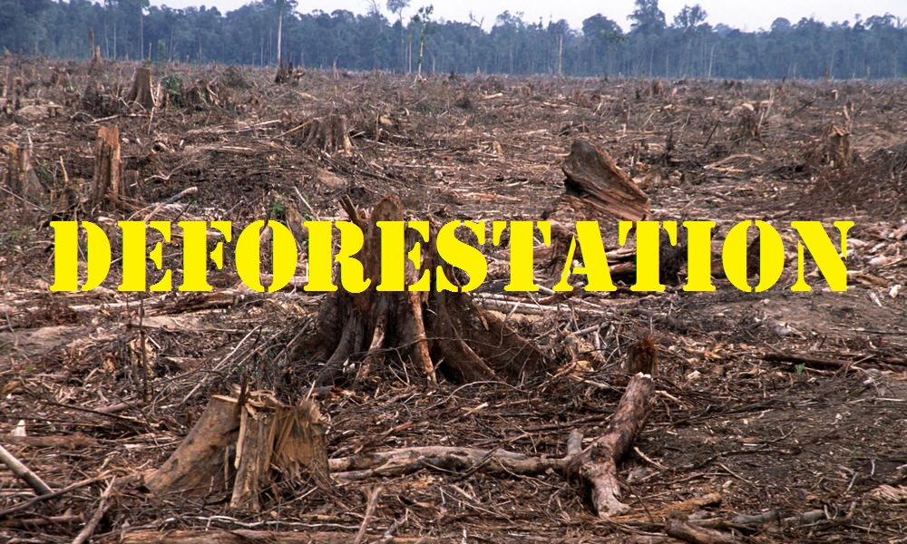 thoughts to promote positive action deforestation