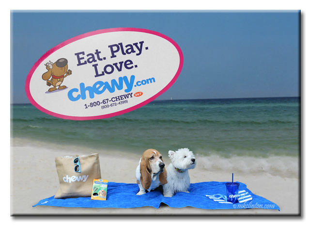 Two dogs on the beach with Chewy.com products