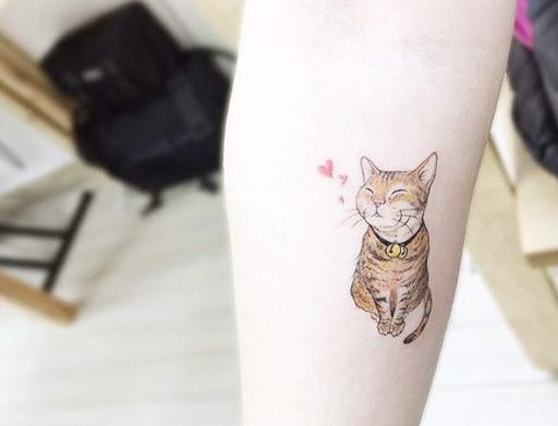 Este gatinho bonito