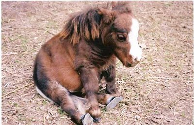 Daily Dose Of Cute Baby Mini Horse