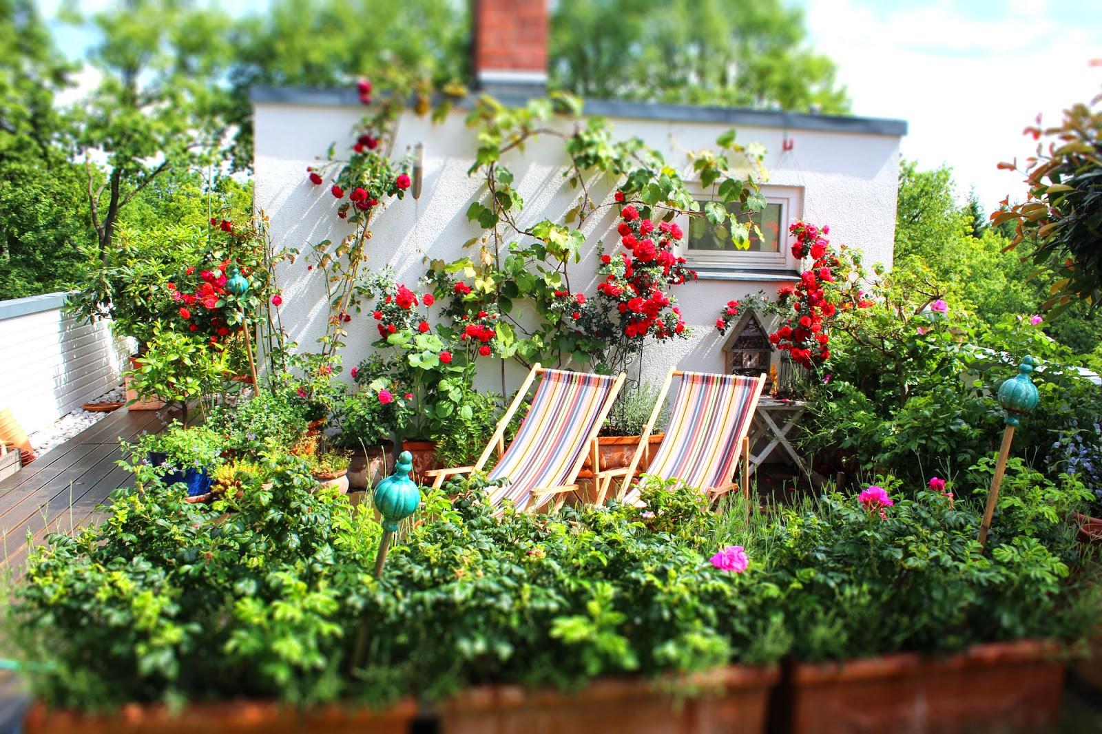 ein cottage garten auf dem dach ppige rosenbl te. Black Bedroom Furniture Sets. Home Design Ideas