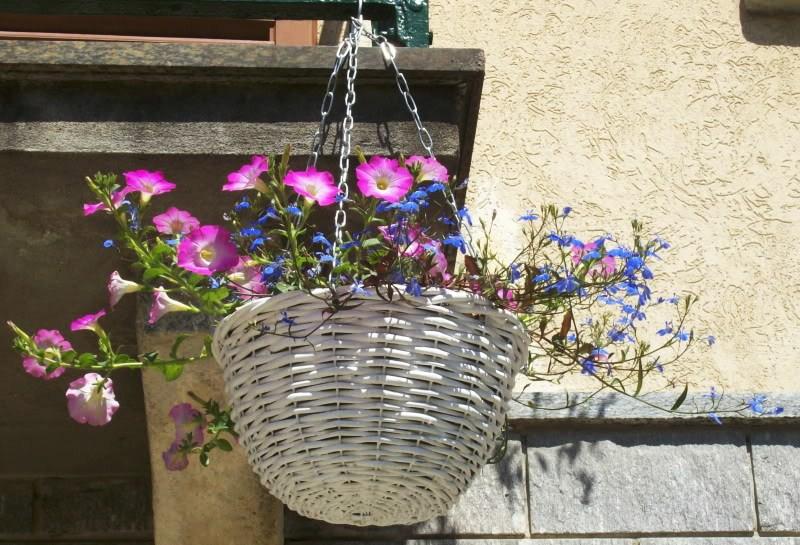 Il giardino sfumato fiori da appendere for Giardino fiori