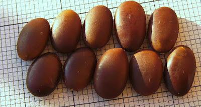 llaó de garrofé, llavors de garrofer, semillas de algarrobo