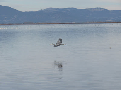 Lower Klamath National Wildlife Refuge