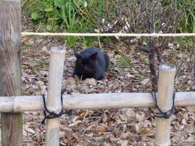 蒲田神社の黒猫