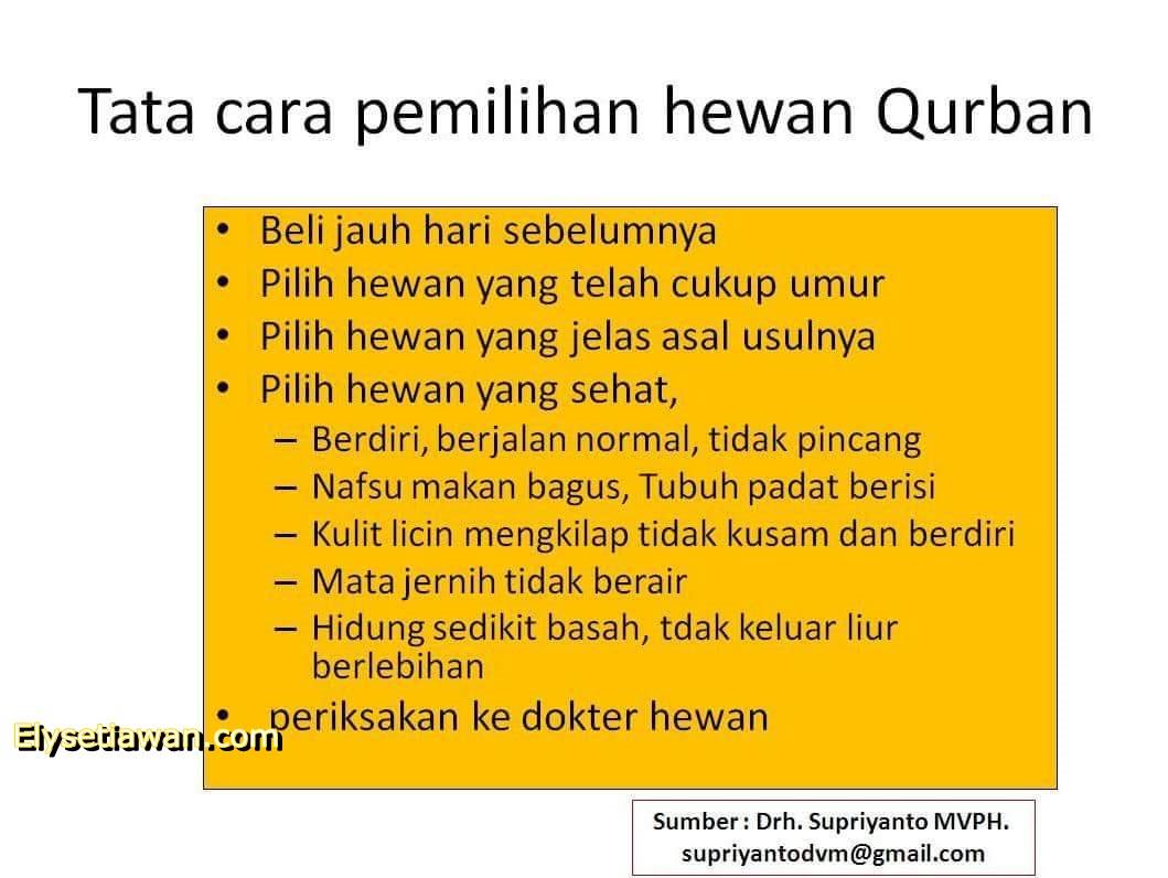 Yang Harus Diketahui Sebelum Menyembelih Hewan Qurban Ely