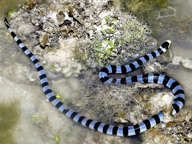 Most Dangerous Snakes In The World