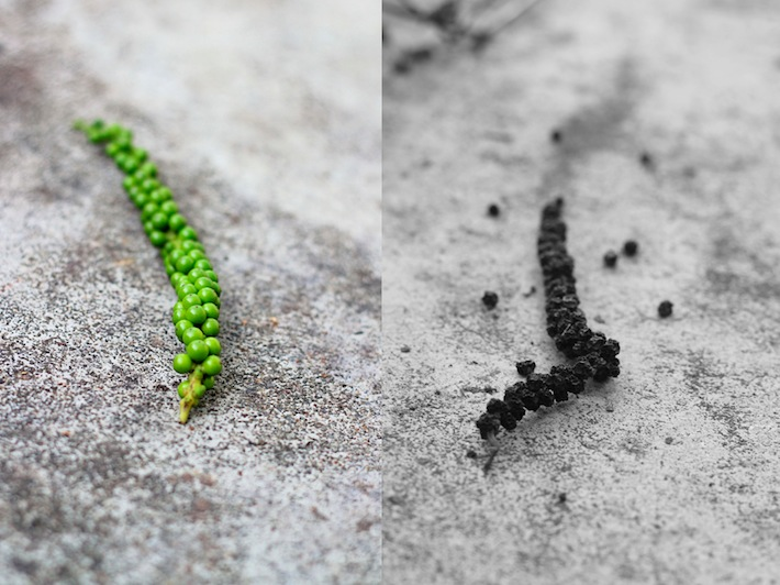 black pepper spice on the vine before and after ripening
