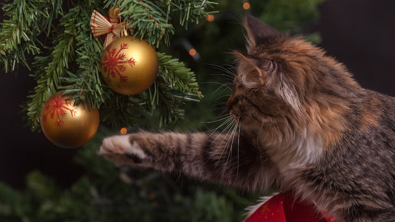 Kitty Cat and Christmas Decorations 2 HD