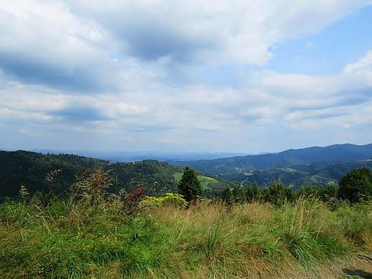 Widok w stronę doliny Obidzkiego Potoku.