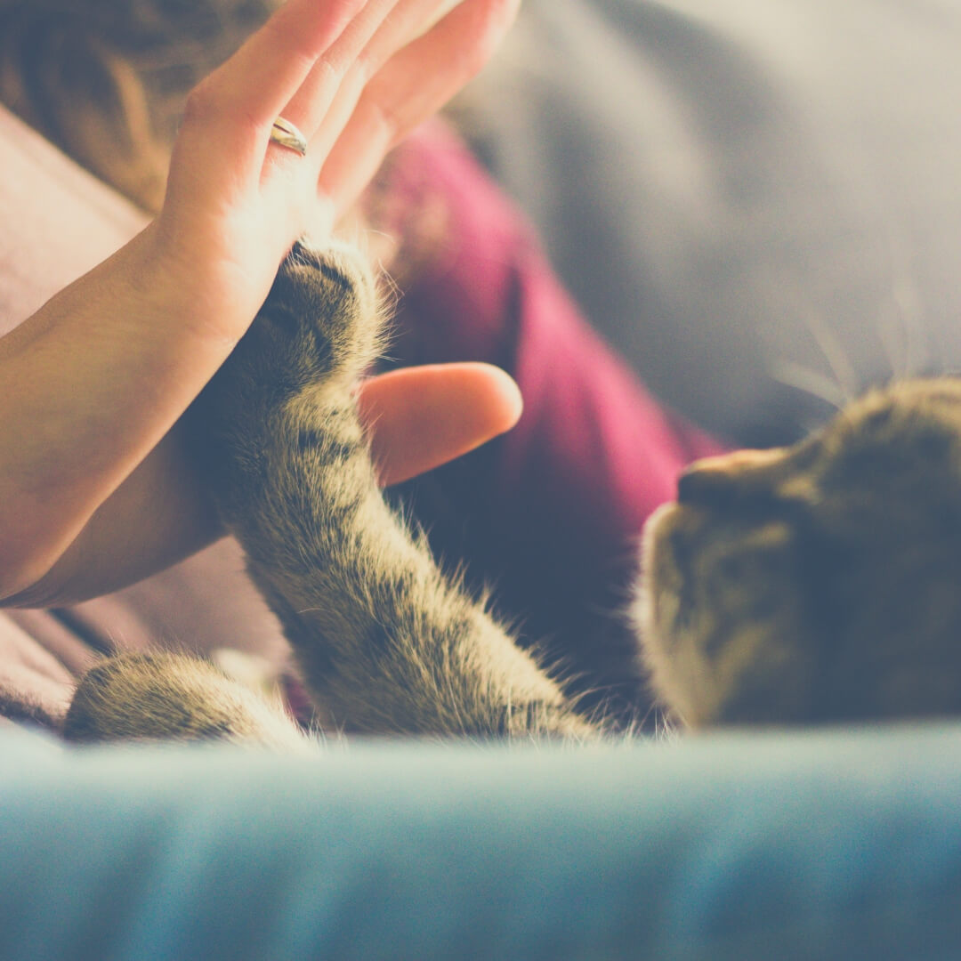 How Having A Pet Can Make The Quality Of Your Life Better | High five your pet, it's fun!