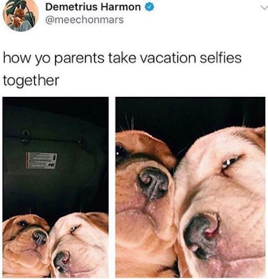 When my parents go on vacation..