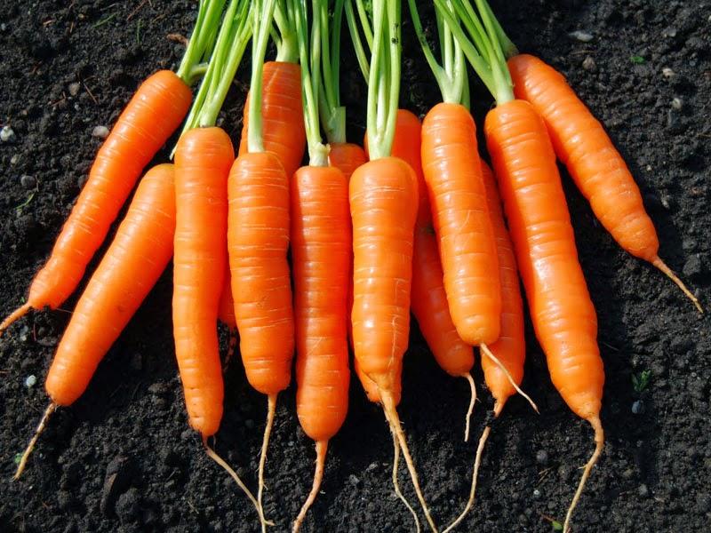 Dengan warna orange khas yang di miliki buah yang satu ini Manfaat Buah Wortel Untuk Kesehatan