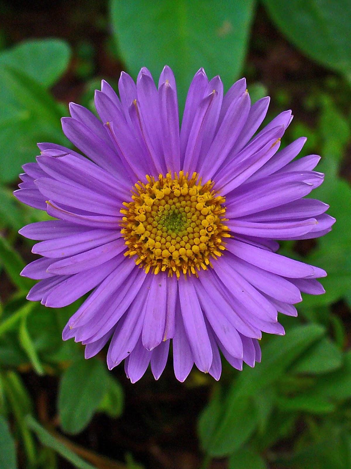W & W Nursery & Landscaping 9 Easy Summer Flowers