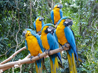 Parque das Aves - O local conta com 16,5 hectares de exuberante Mata Atlântica nativa, onde mantém mais de 1.320 aves, sendo cerca de 143 espécies diferentes. São aves dos quatro cantos do Brasil e aves exóticas de diversas partes do mundo, muitas delas ameaçadas.  Os visitantes podem entrar nos viveiros de imersão para sentir o bater das asas das vibrantes araras e olhar nos olhos de um tucano.